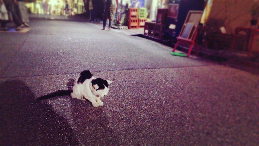 大島酒店-ネコ