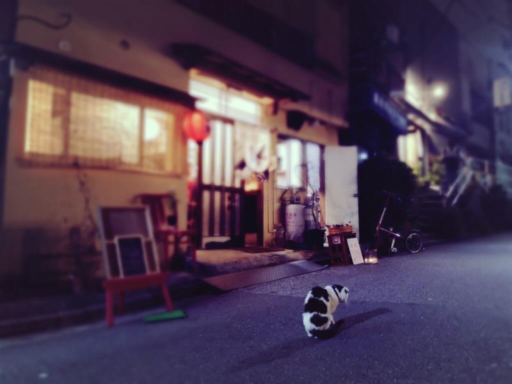 大島酒店ネコ