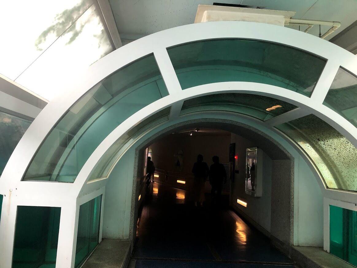 アシカアザラシ-アーチ形水槽