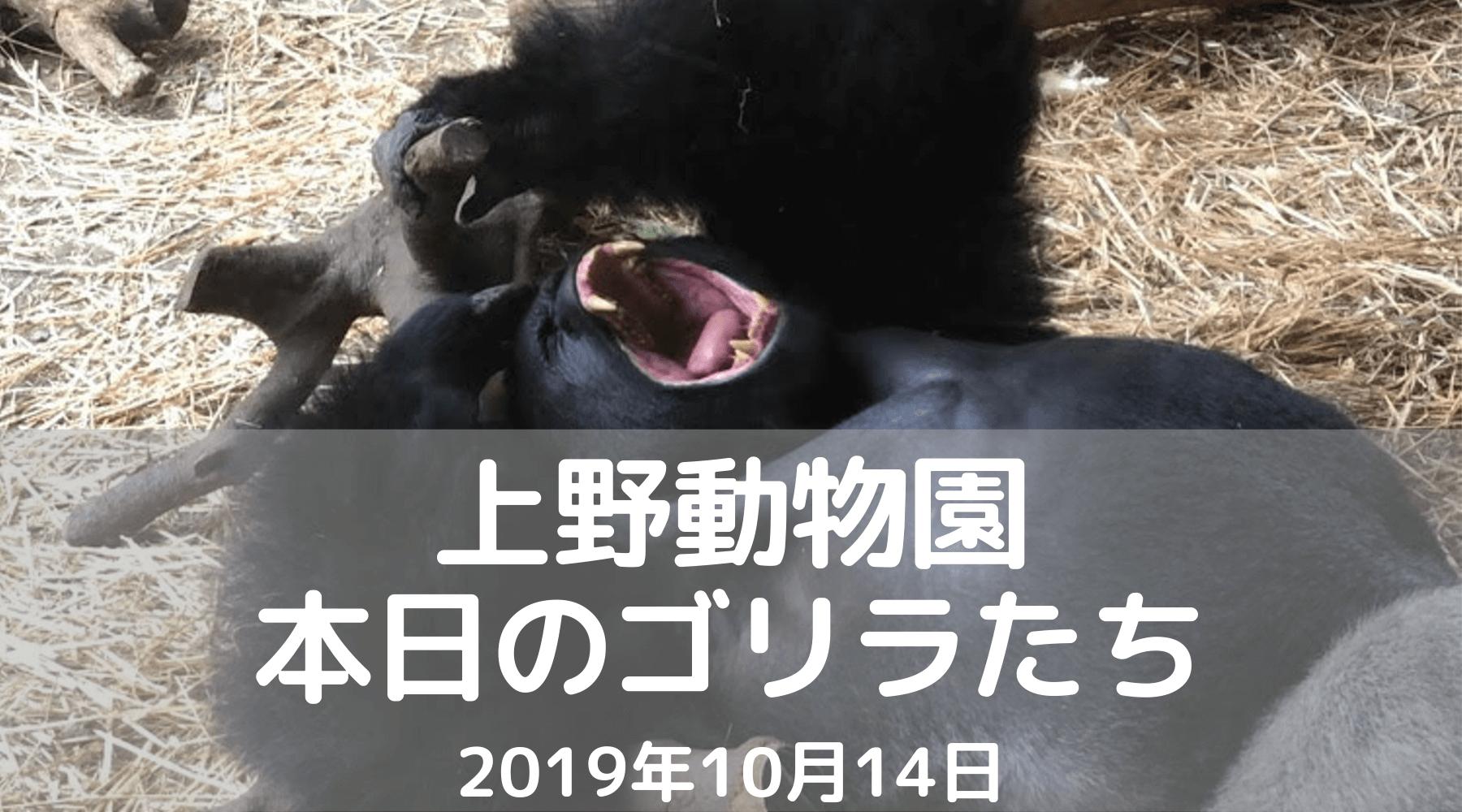 上野動物園-ゴリラ-20191014