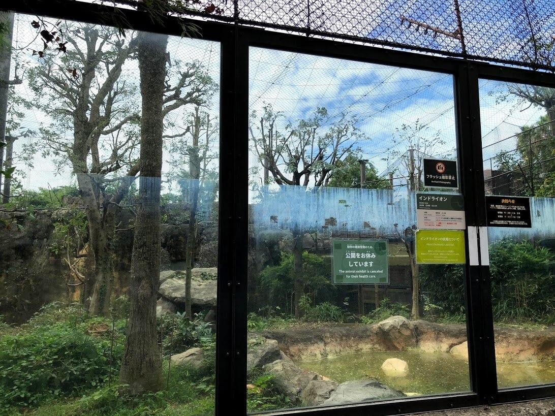 上野動物園-ライオン