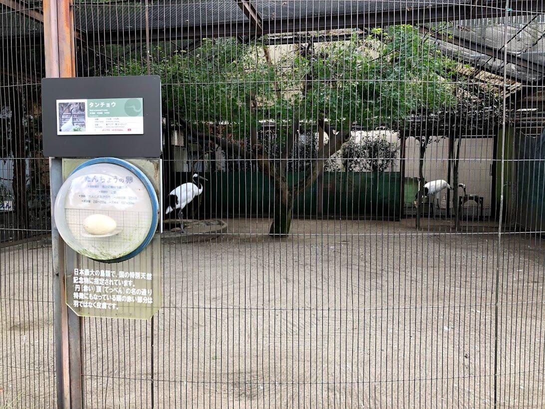 上野動物園-タンチョウ