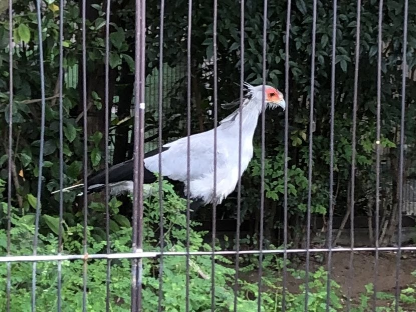 上野動物園-ヘビクイワシ