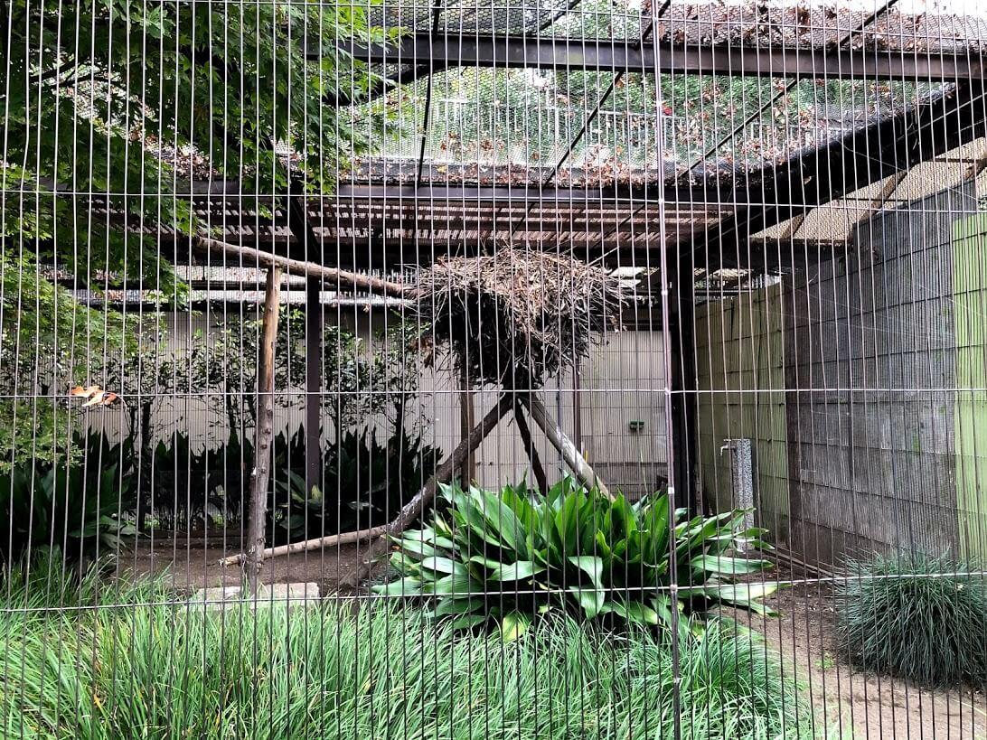 上野動物園-シュモクドリの巣