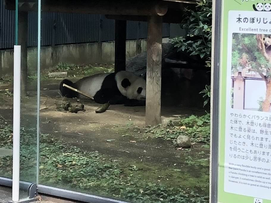 上野動物園-パンダ