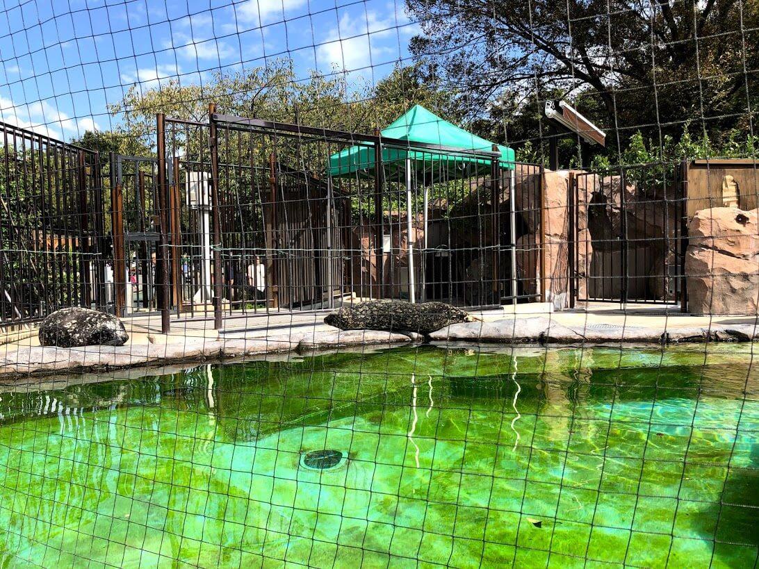 上野動物園-アザラシ