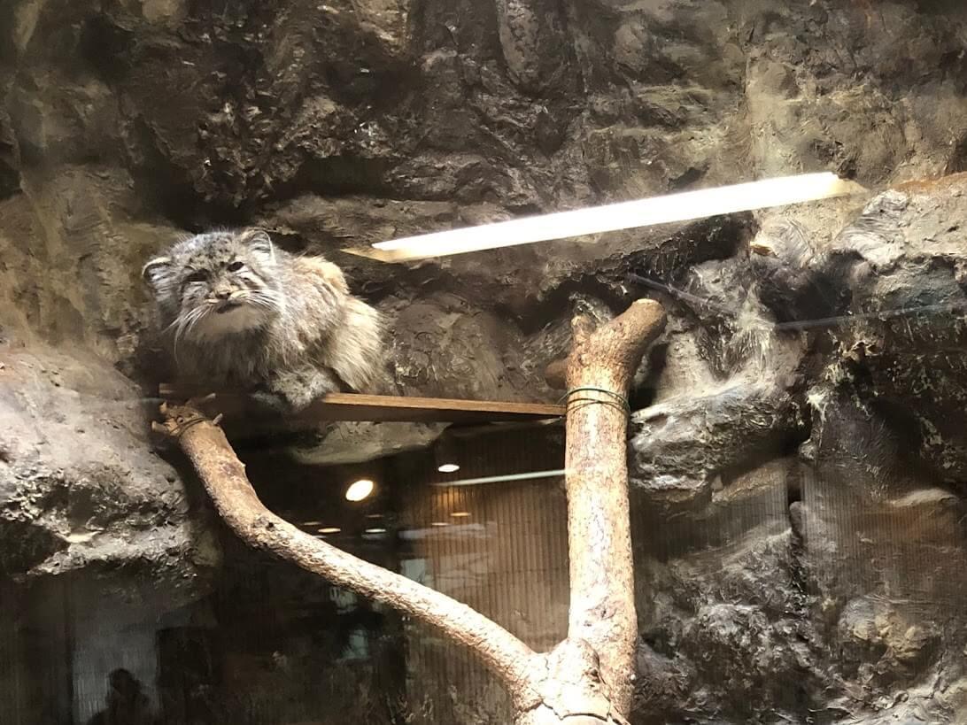 上野動物園-