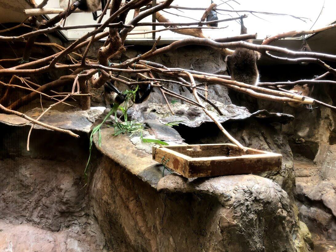 上野動物園-オリイオオコウモリ
