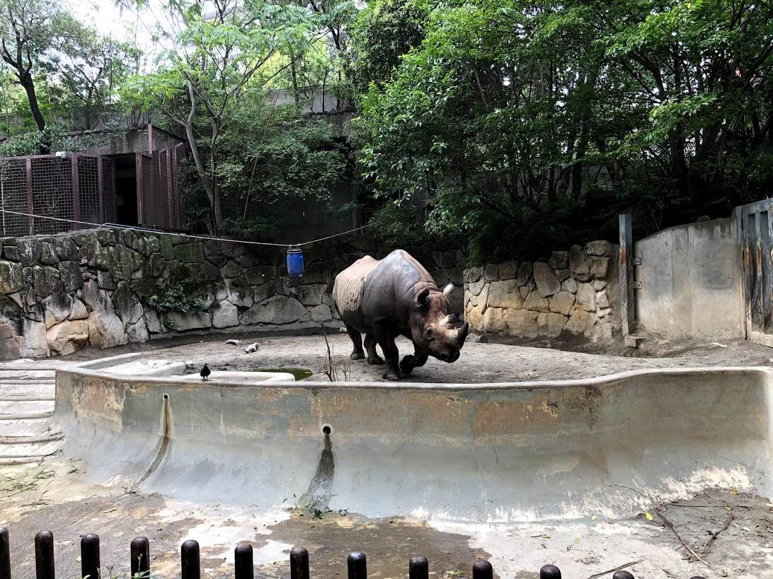 上野動物園-サイ
