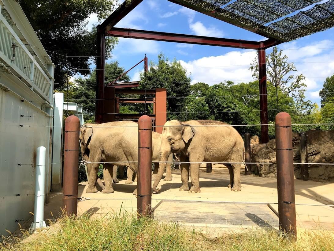 上野動物園-インドゾウ