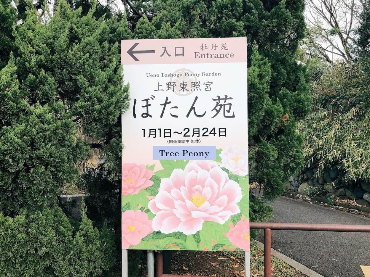 上野東照宮-ぼたん苑
